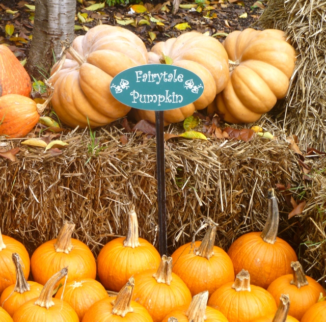 A Cinderella pumpkin-- I didn't really know these existed.